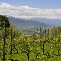 vineyard_4212094_960_720.jpg