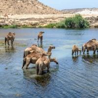Oman_Wadi_Darbat_Jempi_Reizen_1024x684.jpg