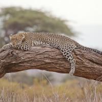 leopard_163035_1920.jpg