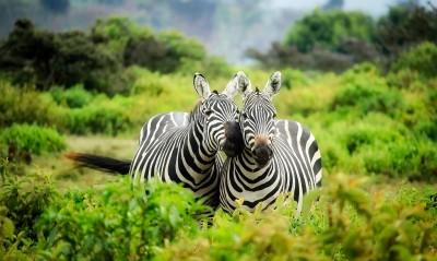 Privé Safari Kenia